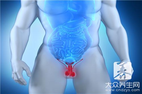 阴茎和睾丸-第2张