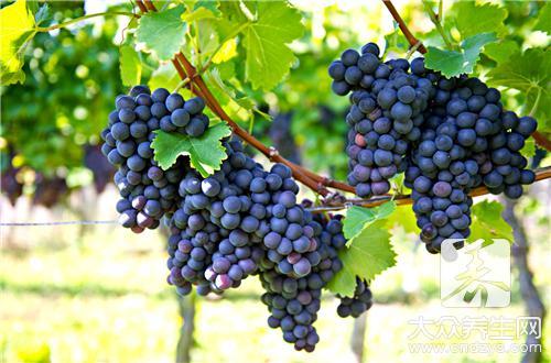 有胃病可以吃葡萄吗?