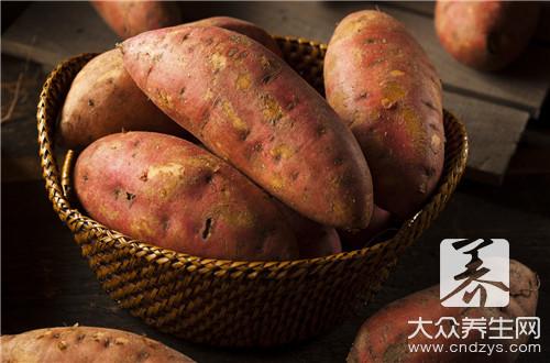 红薯淀粉含量